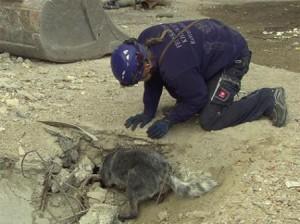 Die Rettungshunde müssen in den Trümmern nach verschütteten Personen suchen.