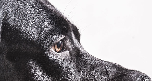 Epilepsie Anfallsleiden Beim Hund Your Dog Hundemagazin