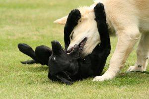 artikelbestrafunghunde